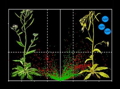 Arabidopsis_Cover.jpg